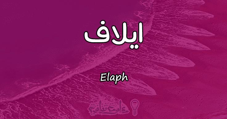 معنى اسم إيلاف Elaph وأسرار شخصيتها وصفاتها