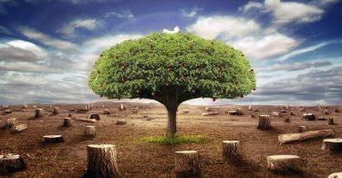 مقال عن أهمية بناء أجيال تتحلى بالأخلاق والقيم الاجتماعية