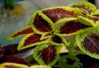 نباتات الظل المتسلقة بأنواعها