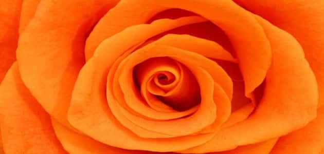 تفسير رؤية اللون البرتقالي في المنام