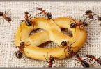 طريقة للتخلص من النمل بشكل نهائي
