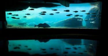 كيفية تربية الأسماك في الأحواض البلاستيكية