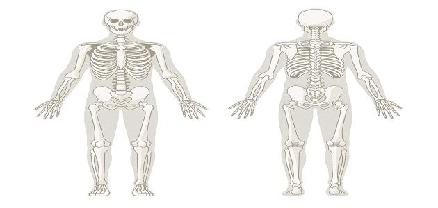 حقائق علمية عن أقوى عظمة في جسم الإنسان