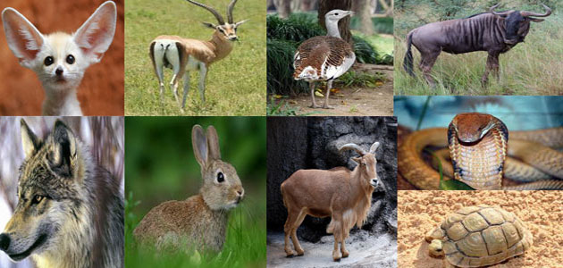 معلومات عن الحيوانات المهددة بالإنقراض في السعودية معلومة ثقافية