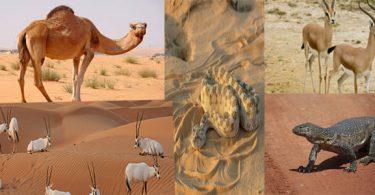 الحيوانات التي تفضل أن تعيش في الصحراء
