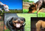 أشرس أنواع الكلاب المفترسة في العالم