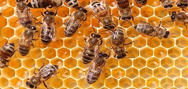 20 معلومة عن عجائب مملكة النحل