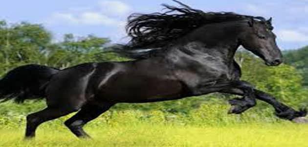 تفسير رؤية الحصان الأسود في المنام