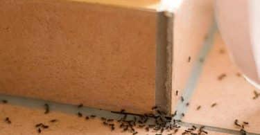 كيفية القضاء على النمل نهائيا من المنزل