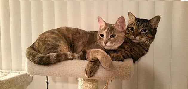 لغة القطط وحركاتها مع الانسان