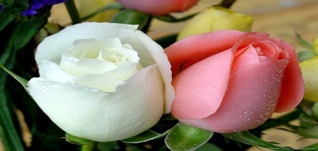 e6b1de03a1b80 14 معلومة عن أسرار الحياة الزوجية السعيدة لعلاقة ناجحة