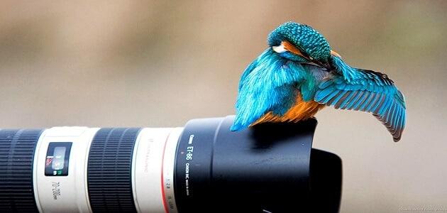 7 معلومات عن كيفية احتراف موهبة التصوير بالخطوات