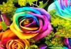 أسماء أجمل الزهور الطبيعية في العالم وفوائدها