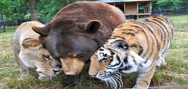 أهم استخدامات جلود الحيوانات