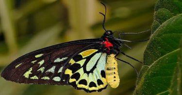 أهم المعلومات عن دورة حياة الفراشة للأطفال بالصور