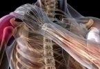 اسباب وجود حرقان في الكتف الايسر والرقبة وكيفيه علاجه