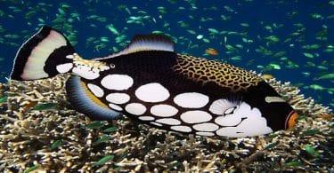 انواع سمك الزينة واسمائها