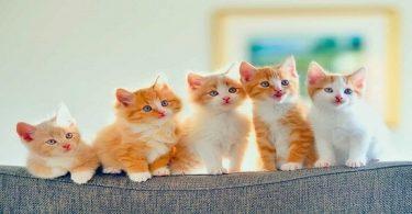 تفسير رؤية القطط في المنام ومحاولة إخراجها من البيت