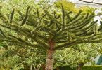 دراسة جدوى زراعة نباتات طبية عطرية