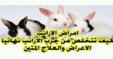 علاج جرب الأرانب بالأعشاب والخل والثوم