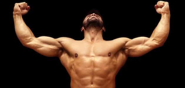 كم المدة لبناء العضلات للمبتدئين