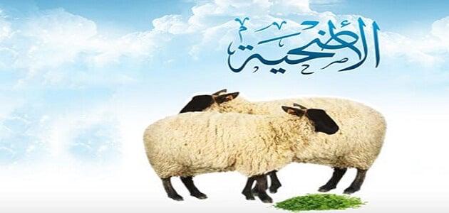 ٢٥معلومة عن شروط الاضحيه والمضحي في الاسلام