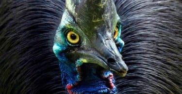 10 معلومات مرعبة عن طائر الشبنم