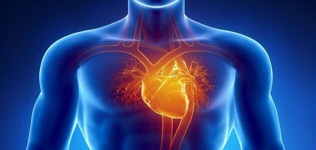 15 معلومة عن وظائف القلب في جسم الانسان