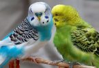 أفضل أنواع العصافير وكيفية الاعتناء بهم