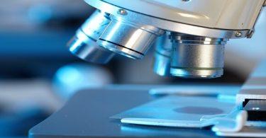 بحث عن الفيروسات والبكتيريا في الأحياء بالمقدمة والخاتمة