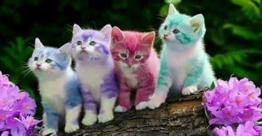 تفسير حلم القطط الصغيرة الملونة