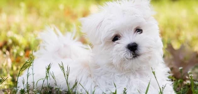 تفسير رؤية الكلب الأبيض في المنام