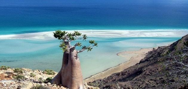 كيفية السياحة في جزيرة سقطرى اليمن الغربية