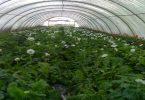 كيفية عمل البيوت المحمية الزراعية بأنواعها