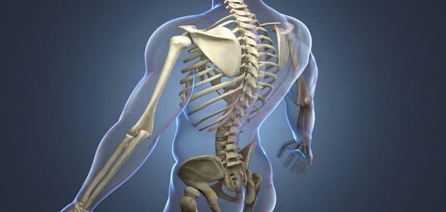 ما هي نسبة شفاء سرطان العظام وكيفية علاجه في جميع مراحله