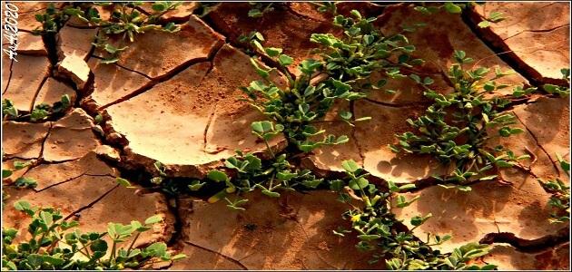 معلومات هل تعلم عن النباتات