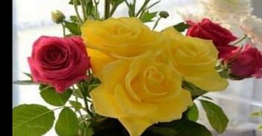موضوع تعبير عن الازهار والورود بالعناصر