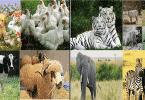 15 طريقة ذكية لتعليم كيفية التعامل مع الحيوانات الاليفة والمفترسة