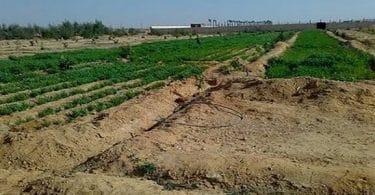 أفضل 5 دول افريقيا لجذب الإستثمار الزراعي