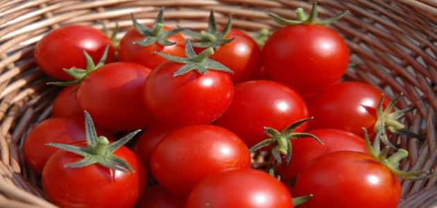 تفسير حلم الطماطم لابن سيرين معلومة ثقافية