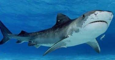 تفسير حلم رؤية سمك القرش في المنام