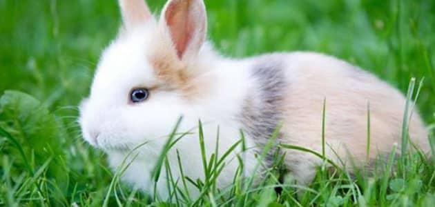 تفسير رؤية الأرانب الكثيرة في المنام