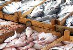 السمك في المنام