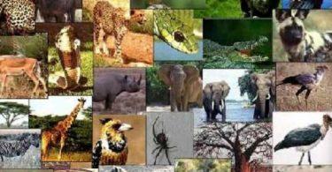 تصنيف الكائنات الحية وتنوعها والتوازنات الطبيعية