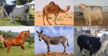 ماذا نستفيد من الحيوانات في البيئة