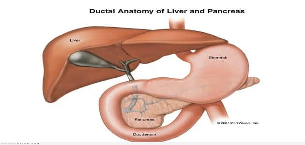 What is the function of the pancreas in regulating blood sugar