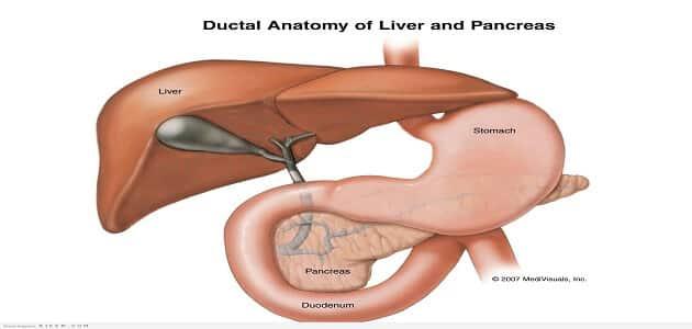 ما وظيفة البنكرياس في تنظيم السكر في الدم