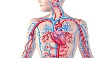 معلومات عن روتين سى لعلاج ضعف الشعيرات الدموية