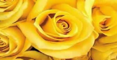 اللون الأصفر في المنام