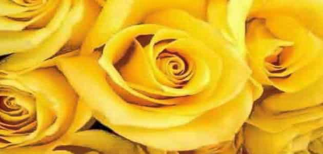 اللون الأصفر في المنام للإمام الصادق معلومة ثقافية